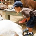 Wordful Wednesday:  Zoo Time