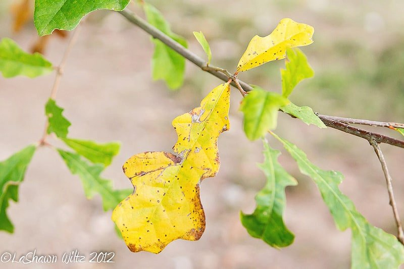 Nurture Photography: Fall arrives