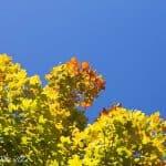 Nurture Photography:Orange/Warmth