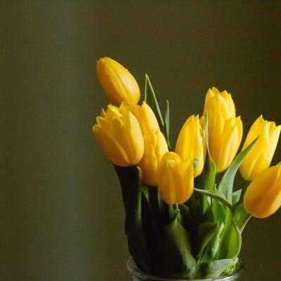 Wordless Wednesday: Macro Photography: Tulips