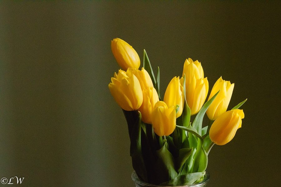 Wordless Wednesday: Macro Photography: Tulips