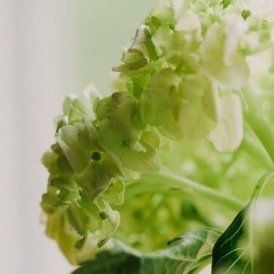 Green…Nurture Photography