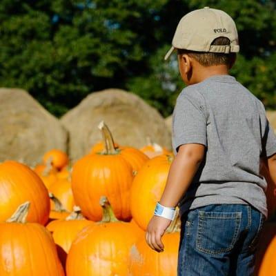 Wordless Wednesday: The Pumpkin Patch