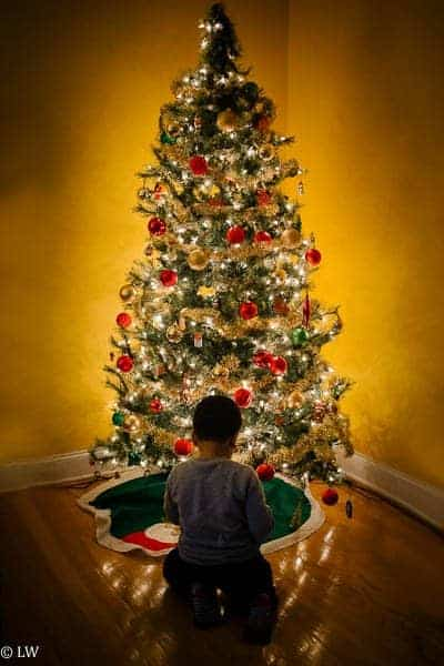 The Lovely Everyday: Oh Christmas Tree