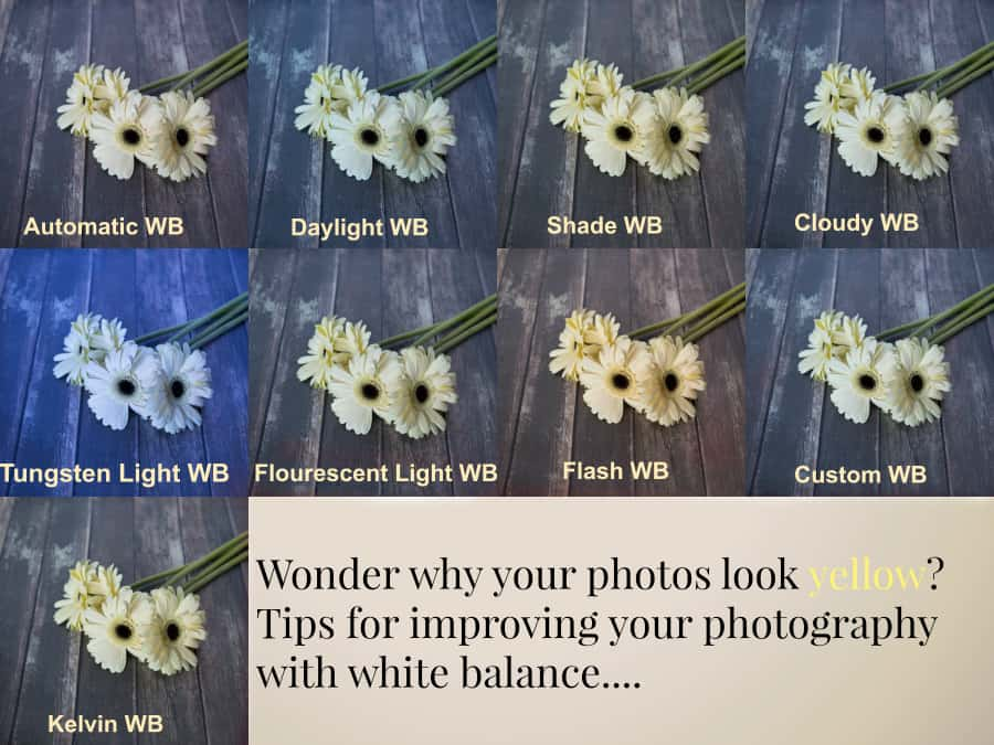 white balance photography tips