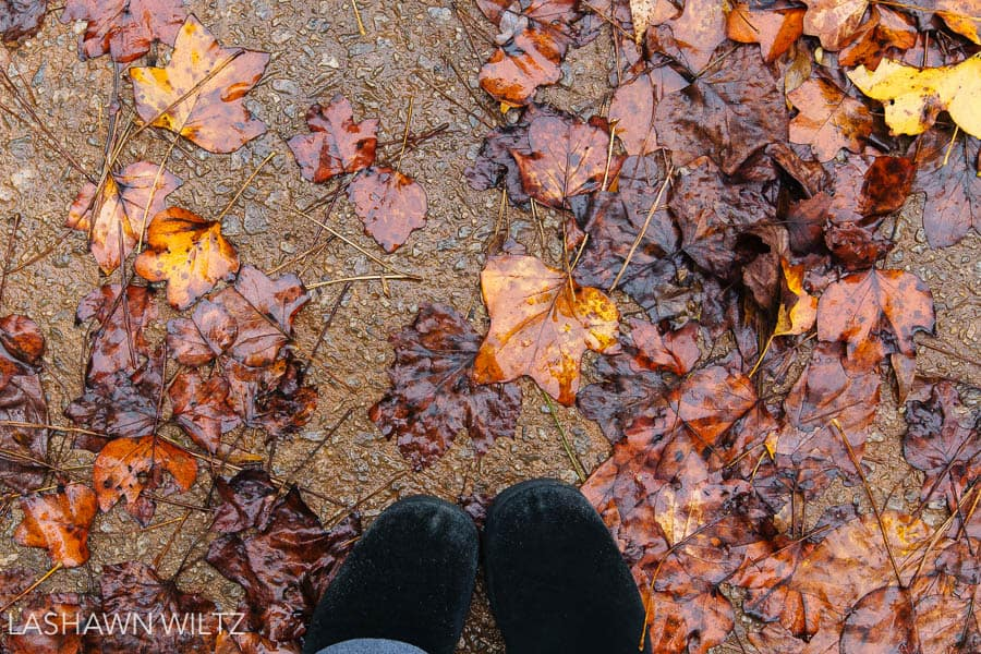 November is also National Photo Posting month, or NaPhoPoMo. Like Nablopomo, you are supposed to post a photo everyday of the month. I modified that and just said I would take one. LOL.