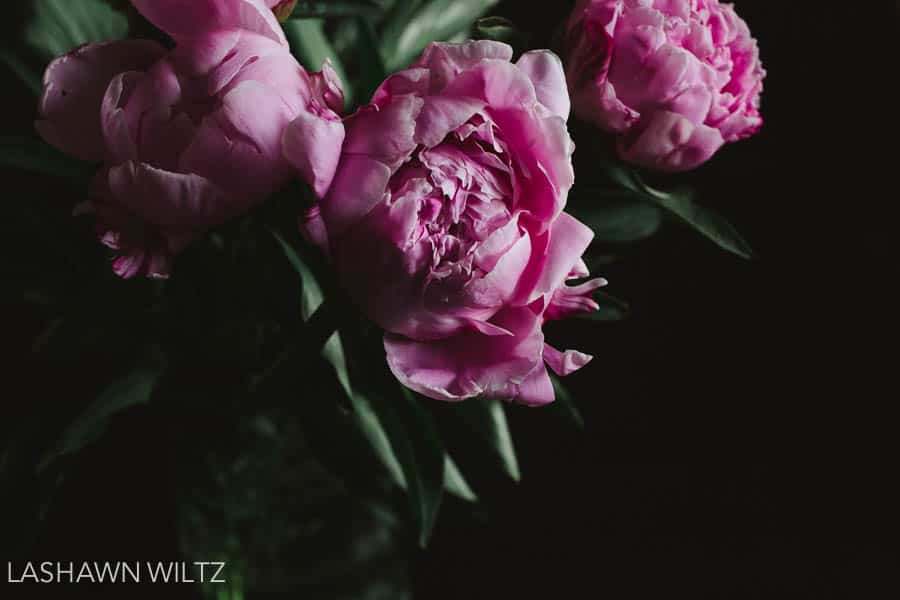 Peonies are my favorite flower and sometimes I buy them as a form of self care.