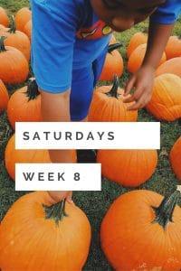 Saturdays Week 8 the Pumpkin Patch