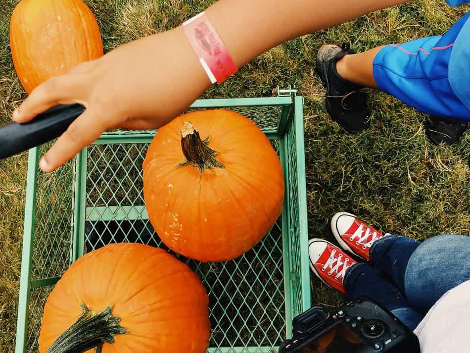 saturday week 8 pumpkin patch