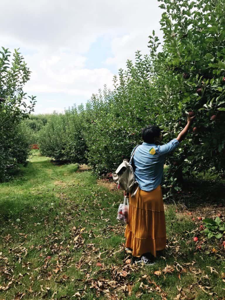 mj picking apples at bj reece