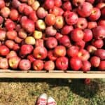 Fall Adventures: Everyone went to pick Apples
