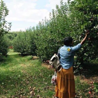 Fall Adventures: Georgia Apple Orchards