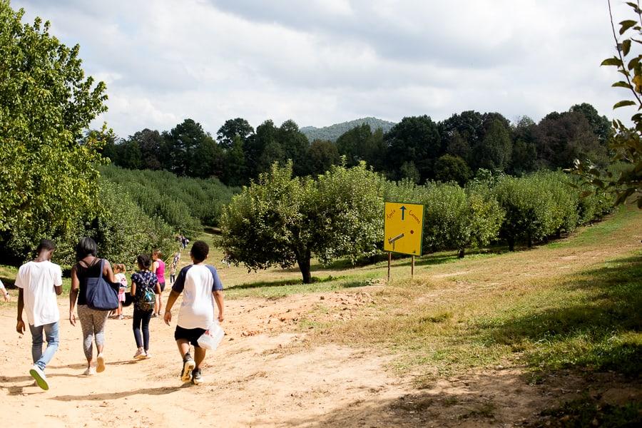 apple picking bj reece