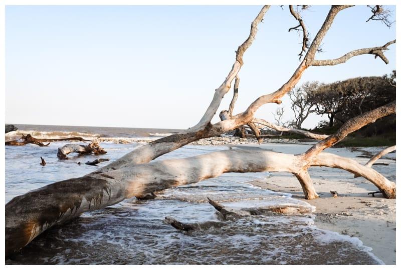 family roadtrip to Jekyll Island driftwood beach