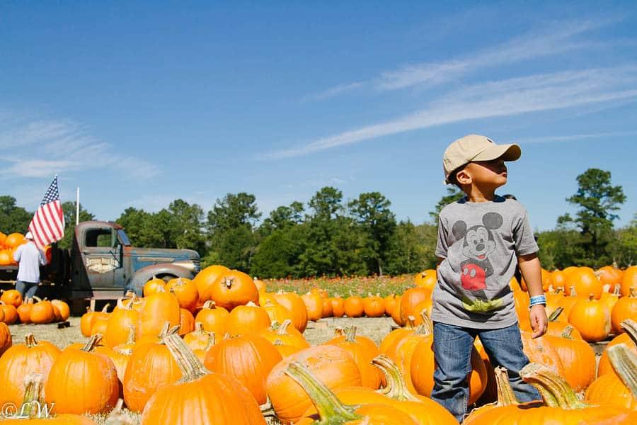 southern belle pumpkin patches near Atlanta