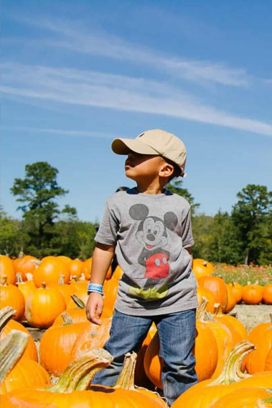 10 OF THE BEST Pumpkin Patches Near Atlanta